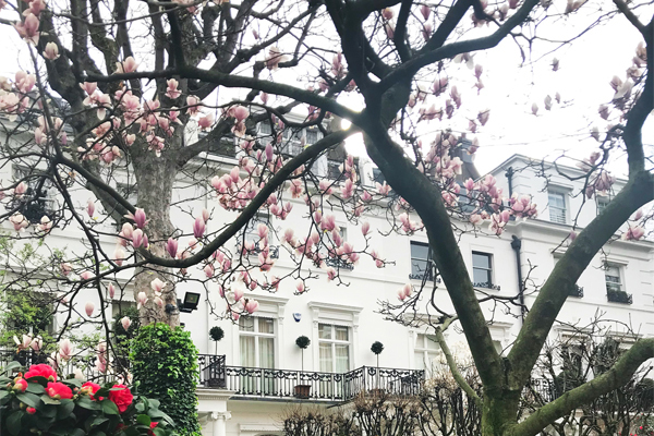 Spring Rental Market Comment 2019 by Fiona Guthrie