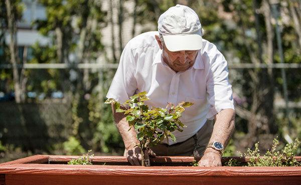 Older person gardening