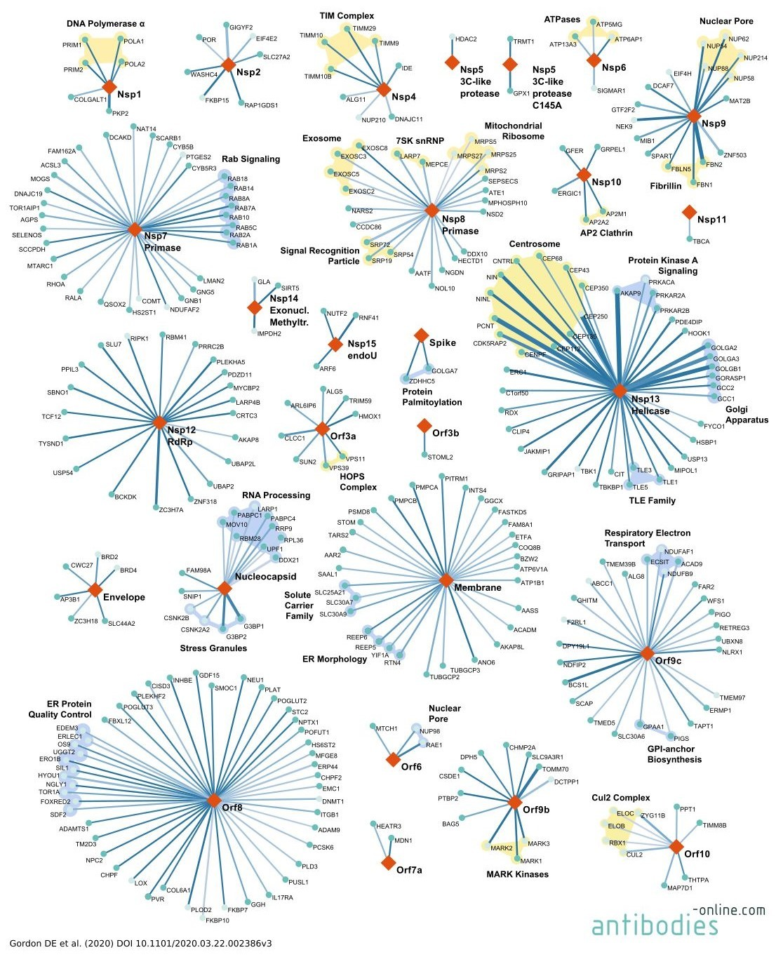 SARS-CoV-2 human host cell interactome