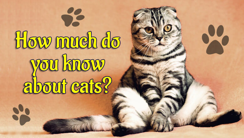 How Much Do You Really Know About Cats?