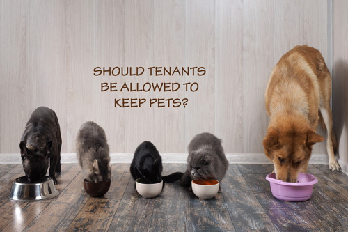 Should tenants be allowed to keep pets?