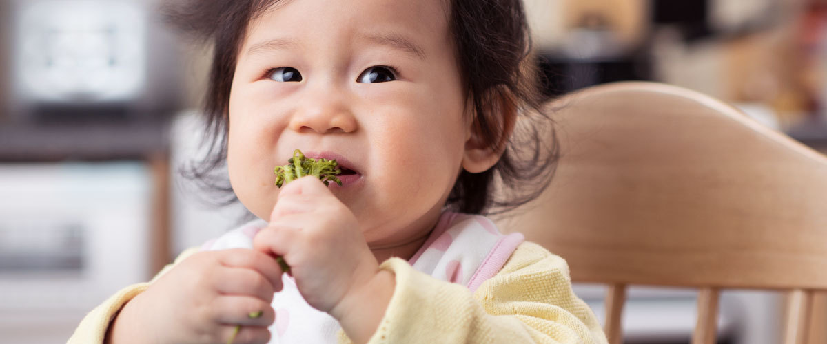 Baby eating cooked broccoli.