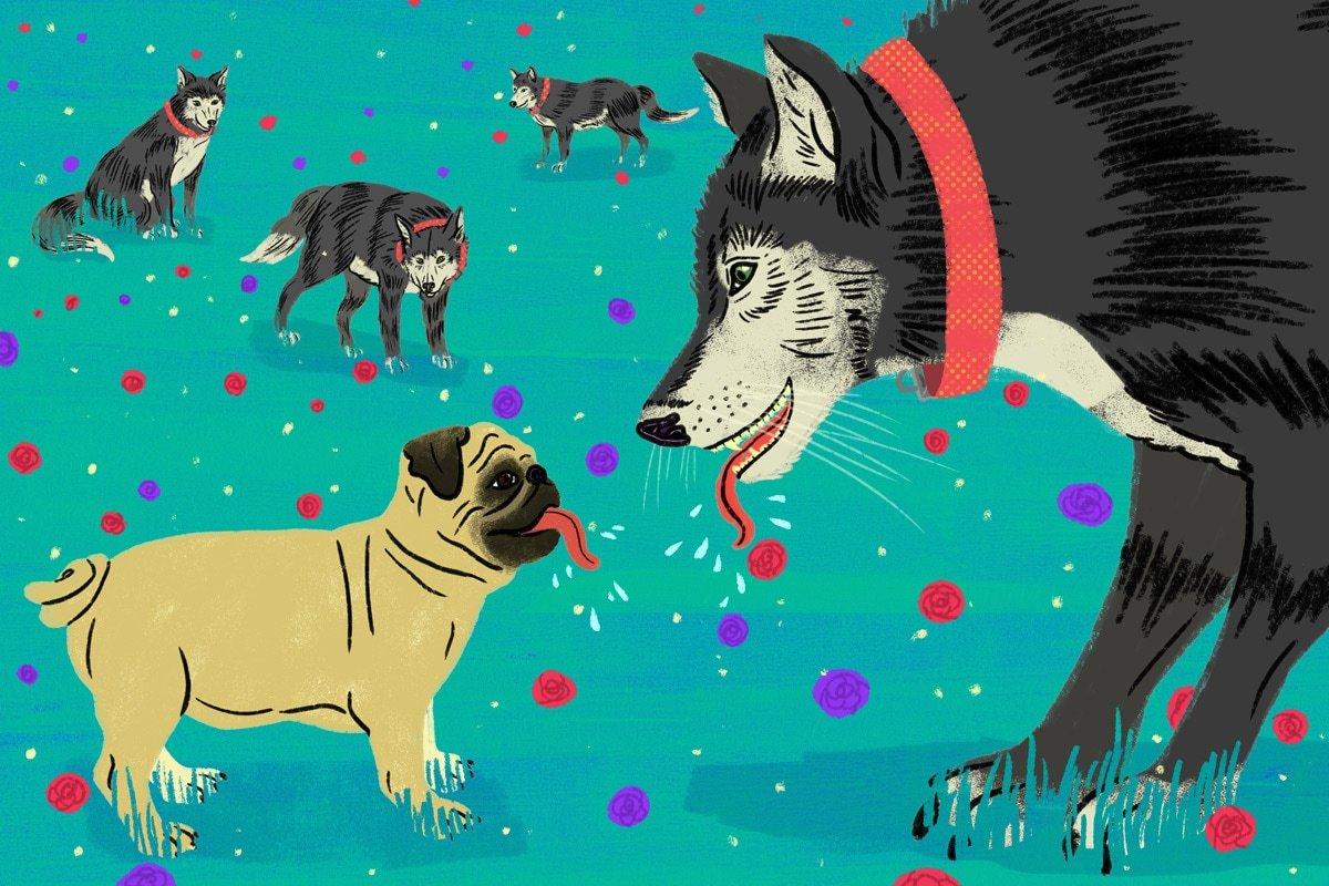 Illustration by Daniel Fishel