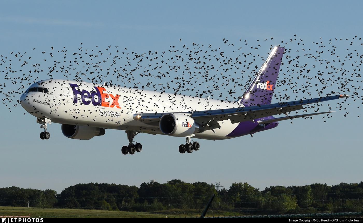 FedEx 767 landing behind birds